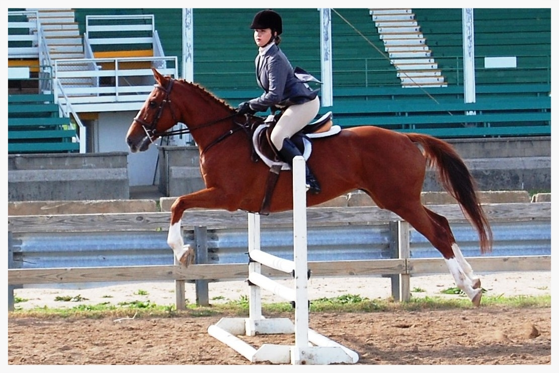 Equestrian team member jumping hurdles on a horse